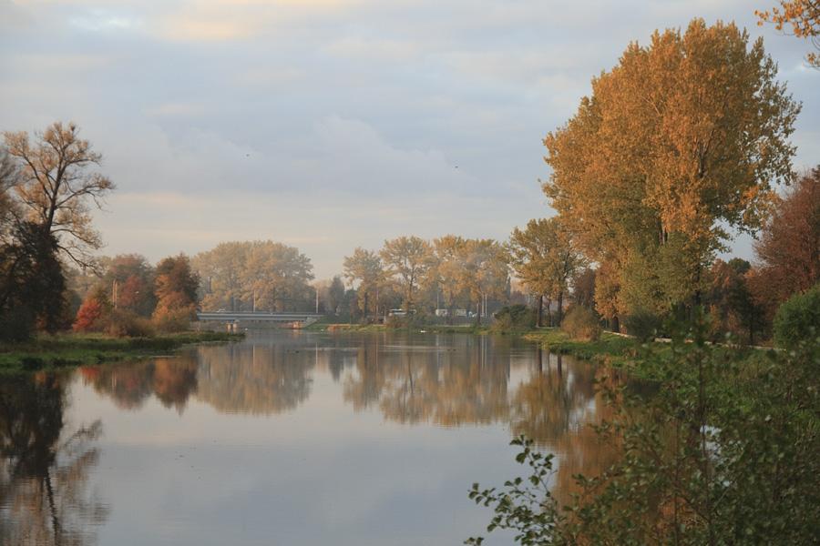 Polish gold autumn / 2009 / Kalisz