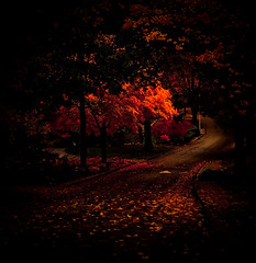 Red (Ian Lacy) Tags: red fall leaves composition canon dark square path pre winding 40d canon40d studio414