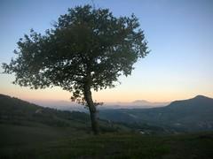 ...contemplazione... (rebranca46) Tags: friends panorama tree silhouette landscape albero contemplazione rebranca