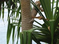 IMG_3534 (shelisrael1) Tags: h kauai napalicoast