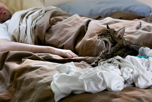 Sunday Sleep-Ins