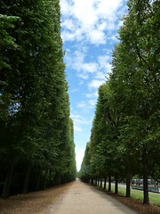 Vanishing Point (stukinha) Tags: park street blue parque trees sky brown white france verde green nature branco azul clouds way point europa europe long path infinity natureza castanho frana row cu versailles nuvens rua vanishing infinito parc fila caminho rvores stuka simetria pontodefuga comprido versalhes interminvel challengeyouwinner stukinha anacompadre thechallengefactory