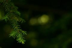 Discover (neelgolapi) Tags: green discover canonef50mmf18ii canoneosdigitalrebelxti