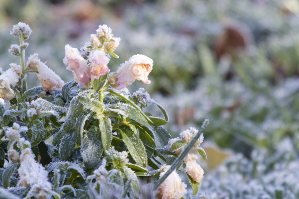 121909_frost8