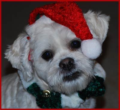 Dory-Santa