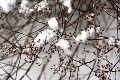IMG_5764 (Ateupamateur) Tags: snow snowing winterweather winterscenes