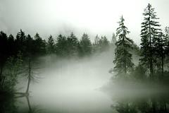 see the air (mav_at) Tags: mist lake mountains reflection tree fog photography austria see photo sterreich nikon foto fotografie nebel scout berge explore baum reflektion tanne salzkammergut explored flickriver maverickat mavat