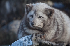 6577 (Arie van Tilborg) Tags: winter zoo blijdorp wintertuin dierentuin blijdorpzoo diergaarde rotterdamzoo arievantilborg