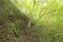 新矢ノ根峠への登り路