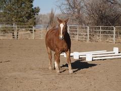 Nothing satisfies like a roll. Mac. (lostinfog) Tags: colorado february 2011 201102 mac e300 horse