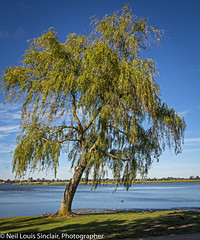 "Lake Willow_ • <a style=""font-size:0.8em;"" href=""http://www.flickr.com/photos/141572193@N06/32972195991/"" target=""_blank"">View on Flickr</a>"