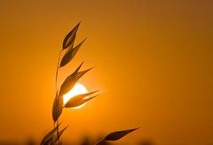 in the summer sun ! (evamathemat) Tags: sunset sky sun nature eva explore greece chalkidiki summergreece evamathemat