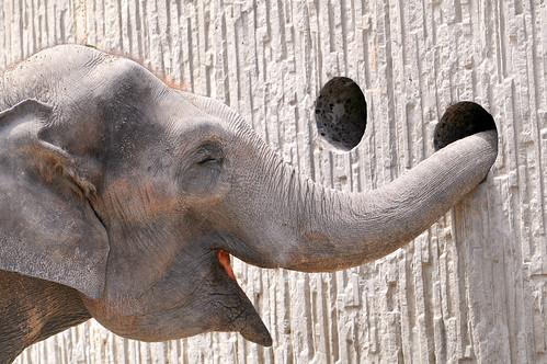 フリー画像| 動物写真| 哺乳類| 象/ゾウ|        フリー素材|