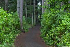 _MG_2231 (Mike Taddeo) Tags: wood trees people dog black flower tree bird beach water kids vancouver island bush sand lab path botany occean frhwofavs