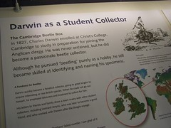 Darwin exhibit, University Museum of Zoology, Cambridge