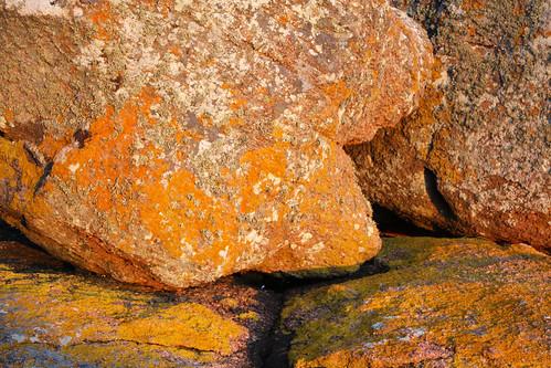 Rochas cubertas en Punta Barbafeita
