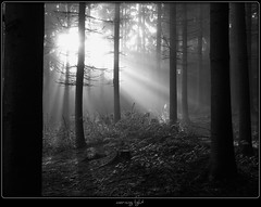 heute Morgen - morning light (NPPhotographie) Tags: wood morning light bw sun white mist black art fog forest sunrise germany creative dust oberberg treee anawesomeshot theunforgettablepictures platinumheartaward vanagram artofimages bestcapturesaoi bestofmywinners magicunicornverybest