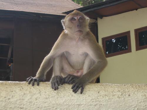 Thailande2 436