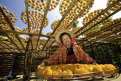 Persimmon (Kaki or Shizi) Fruit Sun Drying  (olvwu | ) Tags: blue sky orange woman sun tree field fruit countryside village farm working chin