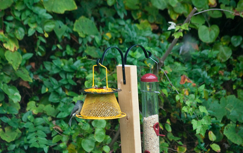 Birds Discover the Feeder in Less than 24 Hours