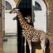 London Zoo (1 of 5)