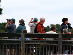 Hawk Watchers 20091010
