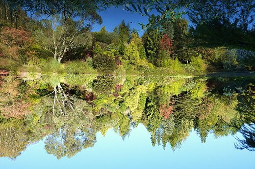 Upside Down Reflections