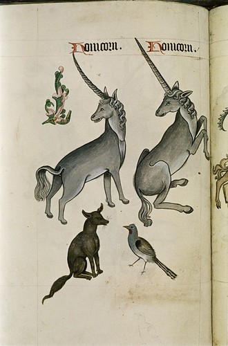 Unicorns. Fox. Bird