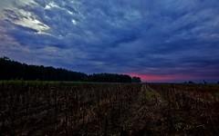 September Dawn (T i s d a l e) Tags: fall sunrise dawn nikon farm northcarolina september east 2009 sunup daybreak firstlight highfield newday tisdale 10mm nikond40 septemberdawn twilightfield