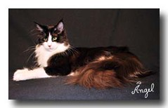 10 (Cardigans Maine Coon) Tags: fin eternity escapes