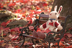 Peaceful Afternoon... (bananagranola (busy)) Tags: park autumn red stuffedtoy rabbit bunny fall wool japan toy japanese knitting doll handmade amigurumi fallenleaves nuigurumi miniaturebench