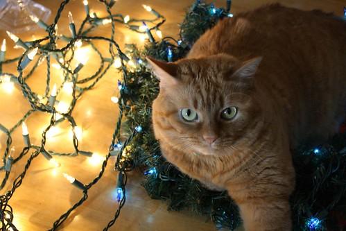 ChristmasCat 074