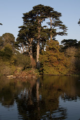 Golden Gate Park (Richmond District, California, United States) Photo