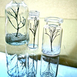 wee-trees
