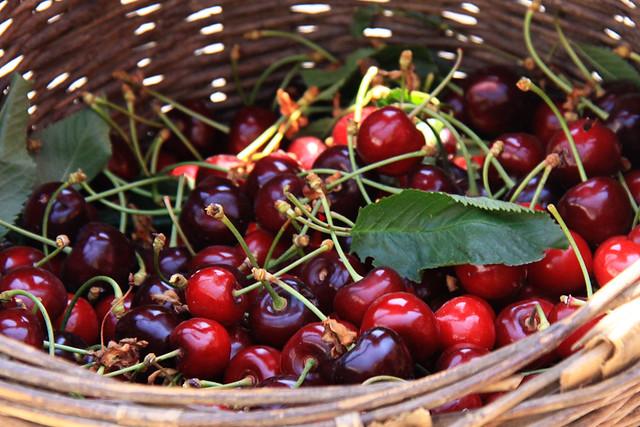 cherries gloria