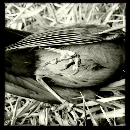 dead bird 3