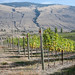 Orofino | Passion Pit Vineyard