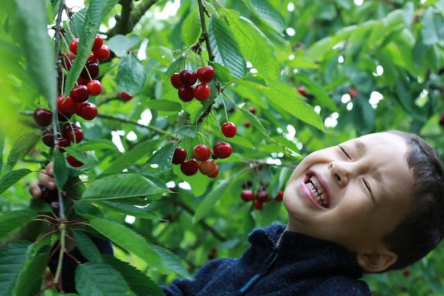 Sam va cherry