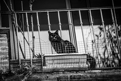 (Jamiecat *) Tags: street black cat chat noir balcony negro gato neko toulouse wink balcon