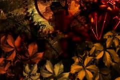 3024darky-seasons (Phil Smirnov) Tags: darky