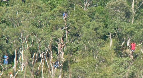 Transcaledonienne 2009 # 13 : dans lesarbres