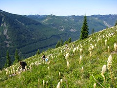 Beargrass and view