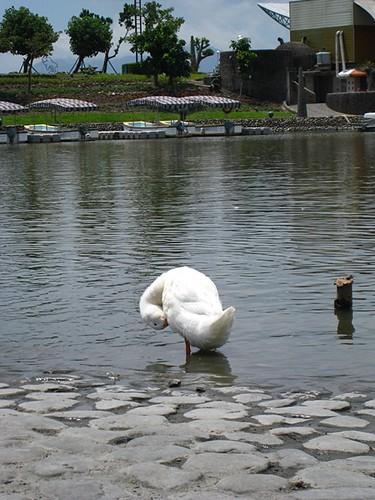 你拍攝的 200907宜蘭2 (12)。