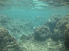 Hawaii-666sm (Phuzy Logik  CherieBosela.com) Tags: hawaii oahu hanaumabay