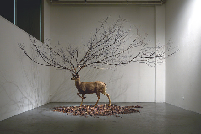 Untitled          300 X 300 X 300 (inch)          Deer Taxidermy, Branch, Leaves.