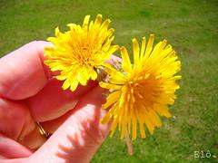 Dia de flor...
