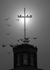 steeple chase (photocentric) Tags: birds cross holy