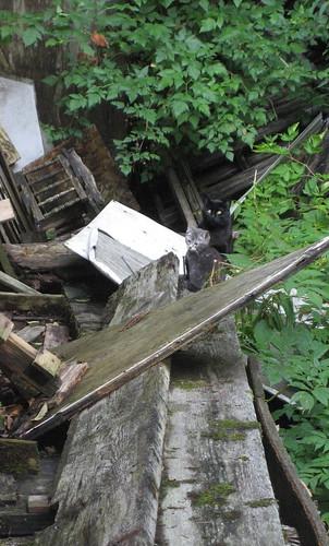 cats in alaska