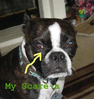 scare-a