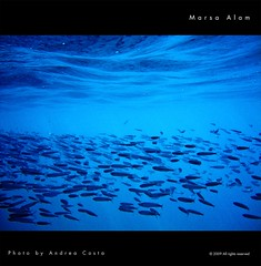 Marsa Alam underwater waves - Andrea Costa Creative